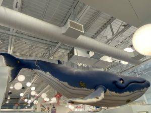 whale in dentist office